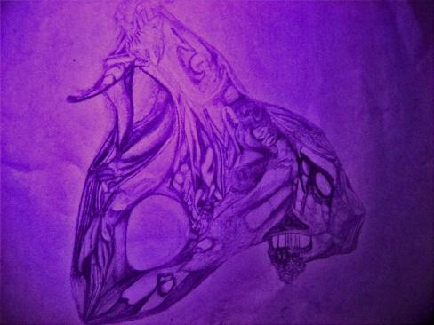 IMG_8566 purple